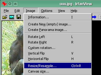 Resize/resample w IrfanView